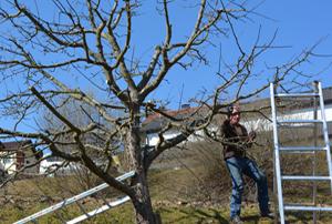 Obstbaumschnittkurs_Foto_Gärtnerei Viehböck