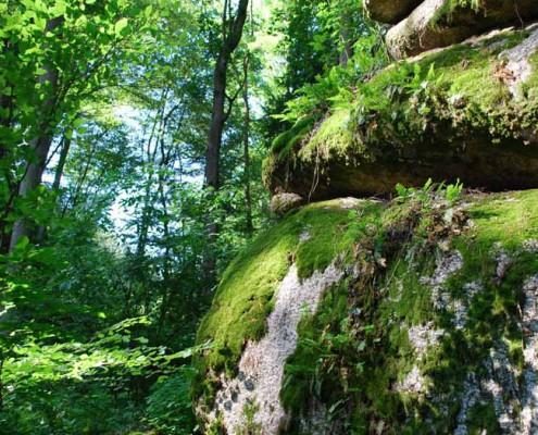 Blockburg im Schluchtwald_Foto_copyright Barbara Derntl