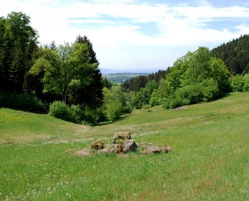 Magerwiese im Naturpark_Foto_copyright Barbara Derntl