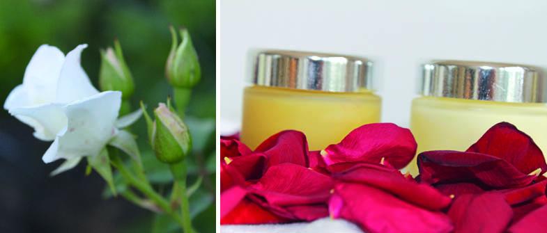 Collage_Heilkunst der Rose_Foto_Gertrude_Riegler
