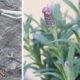 Collage_Pflanzenwässer_Fotos Gertrude Riegler