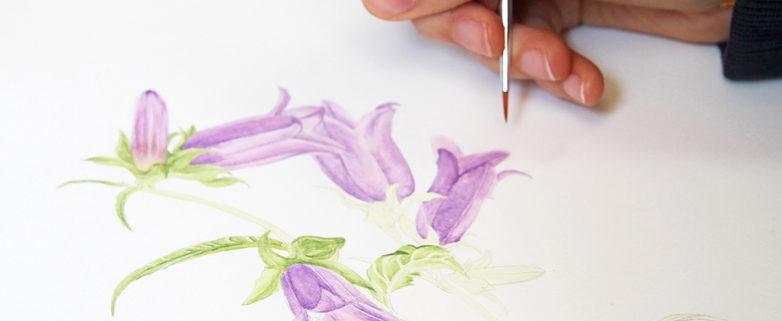 Botanische Illustration_Foto_Alois Wilfling