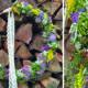 Collage_Wildkräuterhoops